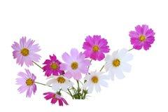 Sonatowy kosmosu kwiat Zdjęcie Royalty Free