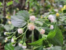 Sonderbare Blume Lizenzfreies Stockfoto
