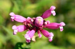Sonderbare Blume Lizenzfreies Stockbild