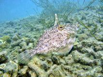 Sonderbare Fische Stockbilder