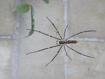 Sonderbare Spinne Lizenzfreie Stockbilder