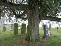 Sonderbarer Baum und alte Gräber lizenzfreies stockbild