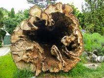 Sonderbarer hohler Baum-Abschnitt Stockfoto