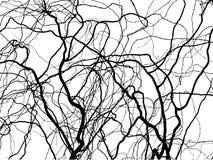 Sonderbarer Zweig Lizenzfreies Stockbild