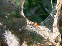 Sonderbares Insekt Lizenzfreie Stockfotos
