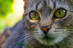 Sonderkommando des Katzenkopfes Lizenzfreie Stockfotos