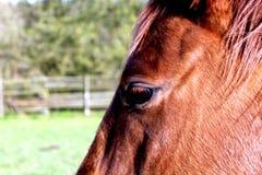 Sonderkommando des Pferdenkopfes stockfotos