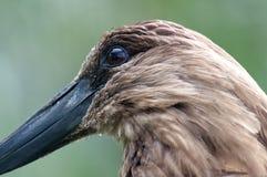 Sonderkommando eines Kopfes eines tropischen Vogels Lizenzfreie Stockfotos