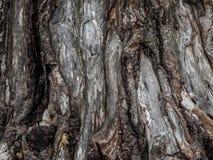 Sonderkommando im Baum Lizenzfreies Stockfoto