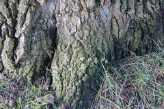 Sonderkommando im Baum Stockbild