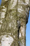 Sonderkommando im Baum Lizenzfreie Stockbilder