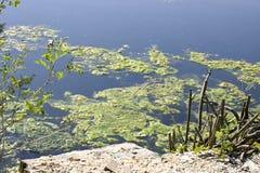 Sonderkommando von Sumpfgebiet lizenzfreie stockbilder
