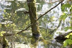 Sonderkommando von Sumpfgebiet lizenzfreie stockfotos