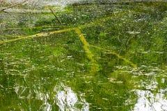 Sonderkommando von Sumpfgebiet stockfoto