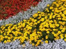 Sonderkommandofotographie von Flower-bed lizenzfreies stockbild