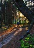 Sondern Sie auf einem Waldpfad aus Stockbild