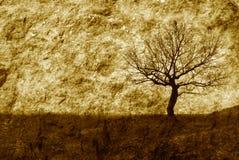Sondern Sie Baum aus Stockfoto