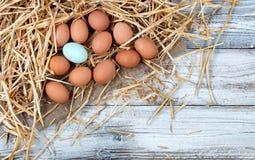 Sondern Sie blaues Ei unter den braunen organischen rohen Hühnereien aus, die auf St. liegen Lizenzfreie Stockfotografie