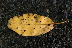 Sondern Sie das beschmutzte gelbe Blatt aus, das über Sand schwimmt stockfotos