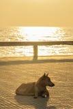 Sondern Sie den faulen Hund aus, der nahe dem Strand sich entspannt und schläft Stockfotografie