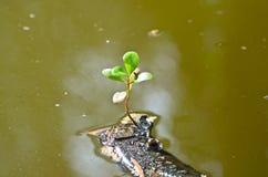 Sondern Sie grünes Blatt auf trockener Niederlassung im Abwasser aus Lizenzfreies Stockbild