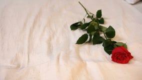 Sondern Sie Rosafarbenes auf dem Bett aus