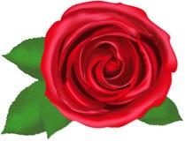 Sondern Sie Rosafarbenes, Vektor aus Lizenzfreies Stockfoto