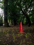 Sondern Sie roten Verkehrskegel in einem tiefen Wald aus Stockfotografie