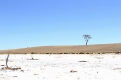 Słonego jeziora osamotniony drzewny niebieskie niebo, Australia Obraz Stock