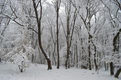 sonen för snowing för mum för grönt omslag för fader för lag för blått lock för basker går den röda vinter Arkivbilder