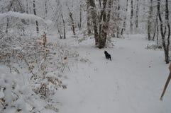 sonen för snowing för mum för grönt omslag för fader för lag för blått lock för basker går den röda vinter Arkivbild
