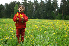 Song. Spring day. Game on a meadow with dandelions Stock Photography