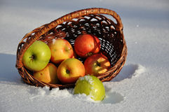For the song Apples on the snow singer Michael Muromova. City of Orenburg, Southern Ural, Russia royalty free stock image