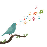 Song bird. Blue bird perched on branch singing a tune Stock Photography