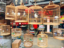 Song birds in bamboo cages, Beijing, China. 
