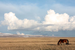 Song-Kul Lake grasslands, Kyrgyzstan Royalty Free Stock Image