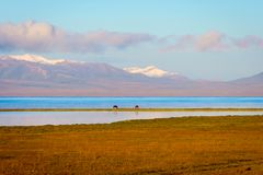Song Kul lake with horses and mountains. Song kul lake with two horses and mountains behind, Kyrgyzstan Royalty Free Stock Images