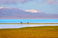 Song Kul lake with horses and mountains. Song kul lake with two horses and mountains behind, Kyrgyzstan Stock Photo