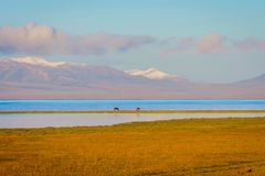 Song Kul lake with horses and mountains Stock Image