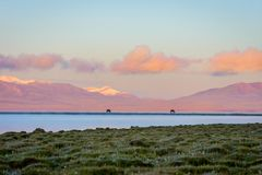 Song Kul lake with horses in sunrise. Song kul lake with two horses and purple mountain in background in sunrise, Kyrgyzstan Stock Images