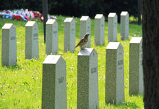 Song thrush on the cemetery Royalty Free Stock Photography