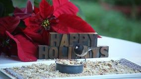 Songbird καλές διακοπές απόθεμα βίντεο