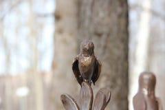 songbird Imágenes de archivo libres de regalías