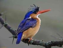 Songbird on branch Stock Photos