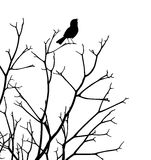 Songbird. Editable vector silhouette of a bird singing at the top of a bare tree Royalty Free Stock Photography