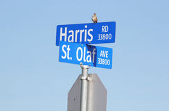 Songbird on Harris Road. A songbird sits on top of a road sign calling out to its mate Stock Photography