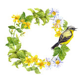 Songbird, meadow flowers, grass. Floral circle frame. Watercolour wreath. Songbird in meadow flowers and grass. Floral circle frame. Watercolour wreath Royalty Free Stock Photography