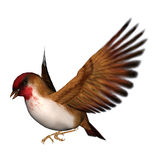 Songbird Scarlet Finch. 3D digital render of a flying scarlet finch isolated on white background Stock Image