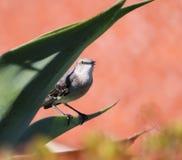 Songbird. A small songbird Stock Photos