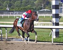 Songbird and Smith. Songbird, the undefeated and stunning bay filly winning the Cotillion with Mike Smith passing the 1/16th pole. Fleetphoto stock photography